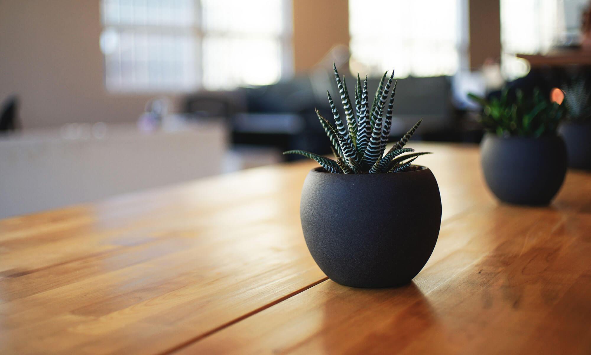 Tant Klorofyll´s Växtservice AB